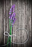 Lavender flower on wooden background Stock Images