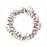 Lavender flower wreath on a white background Royalty Free Stock Photos