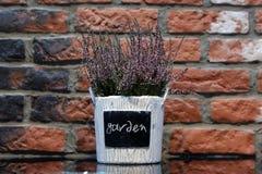Lavender in a flowerpot. Bricks background Stock Image