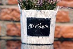 Lavender in a flowerpot. Garden Stock Image