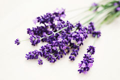 Lavender flowers. Bunch of lavender flowers - flowers and plants royalty free stock photo