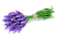 Lavender flowers. A bunch of lavender flowers on a white background stock photo
