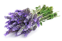 Lavender flowers. A bunch of lavender flowers on a white background stock photography