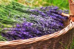 Free Lavender Flowers Stock Photo - 75261210