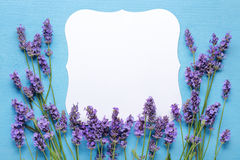 Lavender flowers around blank card Stock Photography