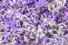 Lavender Flowers Background Royalty Free Stock Image