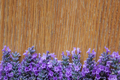 Lavender flowers on a background texture of a tree Stock Image