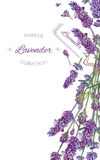 Lavender flowers banner Stock Photography