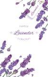 Lavender flowers banner royalty free illustration