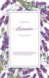 Lavender flowers banner stock illustration