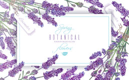 Lavender flowers banner Royalty Free Stock Photos