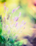 Lavender flowers on blurred sunny garden or park background. Floral border stock photos