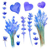 Lavender flowers, bouquet, brunch, hearts hand drawn watercolor painting botanical illustration isolated on white, floral set for Stock Image