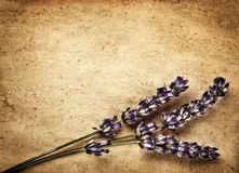 Lavender flowers on brown backdrop. Lavender flowers on brown abstract backdrop, beautiful purple floral bouquet decorates retro old paper card, violet plant stock images