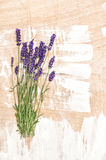 Lavender flowers Bunch of fresh blossoms Stock Image