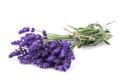 Lavender flowers bunch. Isolated on white background Royalty Free Stock Image