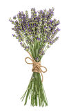Lavender flowers bunch isolated on white. Fresh provencal bouque Royalty Free Stock Photos