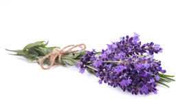 Lavender flowers bunch. Tied isolated on white background stock images