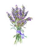 Lavender flowers bunch. Watercolor. Lavender flowers bunch, bouquet. Watercolor floral draing Stock Photography