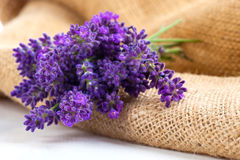 Lavender flowers on the burlap. Over white background Royalty Free Stock Photography