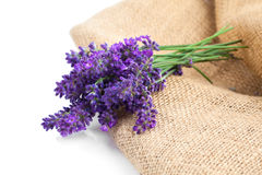 Lavender flowers on the burlap. Over white background royalty free stock photos