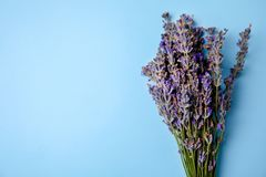 Lavender flowers on color background. Top view stock photography