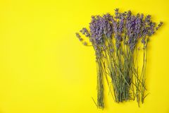 Lavender flowers on color background. Top view royalty free stock photography