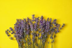 Lavender flowers on color background. Top view royalty free stock images