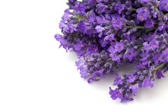 Lavender flowers and empty space for your text Royalty Free Stock Photography