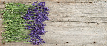 Lavender flowers fresh wooden background Stock Images