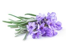 Lavender. Flowers isolated on white Stock Photo