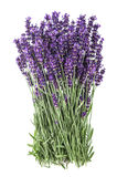 Lavender flowers isolated white background Royalty Free Stock Image