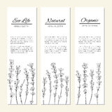 Lavender flowers isolated on a white, vertical banners, labels, hand drawn doodle vector sketch herbal vintage graphic. Engraving collection for cards, stickers Royalty Free Stock Image