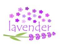 Lavender flowers. Lavender label concept. Vector illustration Stock Image