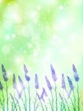 Lavender Flowers Landscapes Stock Photos
