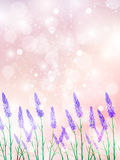 Lavender Flowers Landscapes Royalty Free Stock Photos