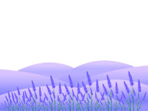 Lavender Flowers Landscapes Stock Photography