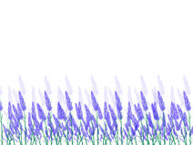 Lavender Flowers Landscapes Royalty Free Stock Images