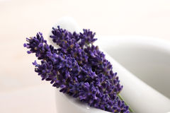 Lavender flowers in a mortar Stock Photography