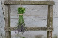 Free Lavender Flowers On A Wooden Fence Drying Royalty Free Stock Photography - 101656057