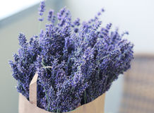 Lavender flowers picked up. Paper pack full of lavender flowers picked up. Summer time and harvest concept Stock Photos