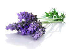 Lavender flowers. A pile of lavender flowers on a white background Stock Photo