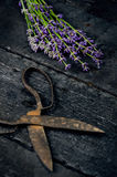 Lavender flowers, rosemary, mint, thyme, melissa with old scissors on a black wooden table. Burnt wood. Spa and cosmetic or cookin. Lavender flowers, rosemary stock photos