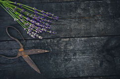 Lavender flowers, rosemary, mint, thyme, melissa with old scissors on a black wooden table. Burnt wood. Spa and cosmetic or cookin. Lavender flowers, rosemary royalty free stock image
