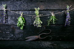 Lavender flowers, rosemary, mint, thyme, melissa with old scissors on a black wooden table. Burnt wood. Spa and cosmetic or cookin. Lavender flowers, rosemary royalty free stock photo