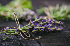 Lavender flowers, rosemary, mint, thyme, melissa with old scissors on a black wooden table. Burnt wood. Spa and cosmetic or cookin. Lavender flowers, rosemary royalty free stock images