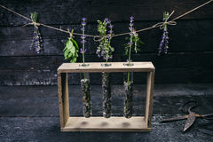 Lavender flowers, rosemary, mint, thyme, melissa with old scissors on a black wooden table. Burnt wood. Spa and cosmetic or cookin. Lavender flowers, rosemary stock photo
