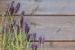 Lavender flowers rural Royalty Free Stock Image
