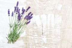 Lavender flowers rustic wooden texture Nature background stock photos