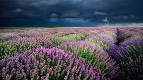 Lavender flowers in the spring storm clouds  and eolian mills Stock Photography